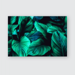 Leaves Spathiphyllum Cannifolium Abstract Green Texture Poster, Pillow Case, Tumbler, Sticker, Ornament