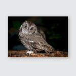 Adorable Screech Owl Poster, Pillow Case, Tumbler, Sticker, Ornament