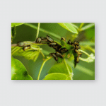 Caterpillar Colonies Green Stem Branches On Poster, Pillow Case, Tumbler, Sticker, Ornament