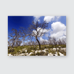 Carmel Forest Israel Slowly Starting Recover Poster, Pillow Case, Tumbler, Sticker, Ornament