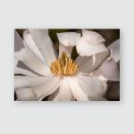 Pink Spring Magnolia Blossoms Close Macro Poster, Pillow Case, Tumbler, Sticker, Ornament