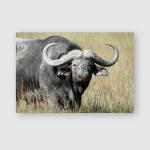 Cape Buffalo Syncerus Caffer Big Bull Poster, Pillow Case, Tumbler, Sticker, Ornament