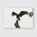 Adult Bald Eagle Wet Strong Rain Poster, Pillow Case, Tumbler, Sticker, Ornament