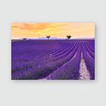 Lavender Field Summer Sunset Landscape Two Poster, Pillow Case, Tumbler, Sticker, Ornament