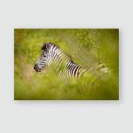 Plains Zebra Equus Quagga Green Forest Poster, Pillow Case, Tumbler, Sticker, Ornament