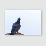 Carrier Pigeon Have Break Poster, Pillow Case, Tumbler, Sticker, Ornament