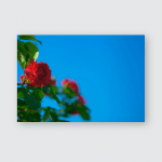 Blurry Red Roses Against Blue Sky Poster, Pillow Case, Tumbler, Sticker, Ornament