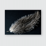 Ostrich Feather Captured On Black Background Poster, Pillow Case, Tumbler, Sticker, Ornament
