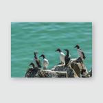 Wild Atlantic Way Ireland Animal Life Poster, Pillow Case, Tumbler, Sticker, Ornament