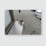 Insolent Sparrow Asks Eat Poster, Pillow Case, Tumbler, Sticker, Ornament