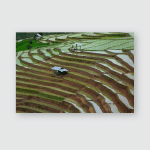 Pa Pong Piang Rice Terraces North Poster, Pillow Case, Tumbler, Sticker, Ornament