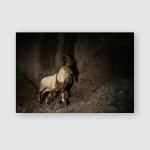 Wild Bezoar Goat Nature Habitat Very Poster, Pillow Case, Tumbler, Sticker, Ornament