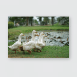 Duck Drake Family Walking Row Country Poster, Pillow Case, Tumbler, Sticker, Ornament