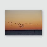 Ducks Flying Over Sound Poster, Pillow Case, Tumbler, Sticker, Ornament