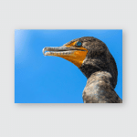 Wild Double Crested Cormorant Along Anhinga Poster, Pillow Case, Tumbler, Sticker, Ornament