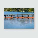 Ducks Row Sunning On River Poster, Pillow Case, Tumbler, Sticker, Ornament