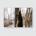 Skin Dead Bear Hangs Poster, Pillow Case, Tumbler, Sticker, Ornament