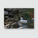 Ducks Swimming On Ponds Birds Animals Poster, Pillow Case, Tumbler, Sticker, Ornament