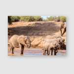 Wild Elephants Riverbed Drinking Water Poster, Pillow Case, Tumbler, Sticker, Ornament