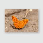 Intermediate Maplet Butterfly Ban Mungnoen Maprang Poster, Pillow Case, Tumbler, Sticker, Ornament