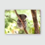 Sleeping Koala On Eucalyptus Tree Sunlight Poster, Pillow Case, Tumbler, Sticker, Ornament