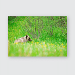 Wild Grizzly Bears Mother Cub Kananaskis Poster, Pillow Case, Tumbler, Sticker, Ornament