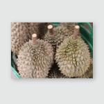 Durian Put Basket Poster, Pillow Case, Tumbler, Sticker, Ornament