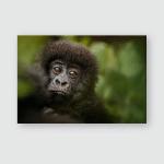 Wild Mountain Gorilla Nature Habitat Very Poster, Pillow Case, Tumbler, Sticker, Ornament