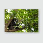 Dusky Leaf Monkey Called Spectacled Langur Poster, Pillow Case, Tumbler, Sticker, Ornament