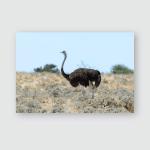 Wild Ostrich Walking African Savannah Poster, Pillow Case, Tumbler, Sticker, Ornament