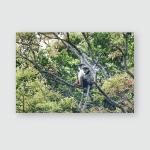Pair Large Raptors Tawny Eagle Aquila Poster, Pillow Case, Tumbler, Sticker, Ornament