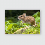 Wild Wood Mouse Resting On Root Poster, Pillow Case, Tumbler, Sticker, Ornament