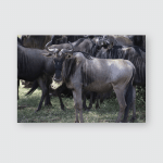 Wildebeest Great Migration Animals Serengeti Poster, Pillow Case, Tumbler, Sticker, Ornament