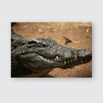 Wildlife Safari African Aligator Animal Poster, Pillow Case, Tumbler, Sticker, Ornament