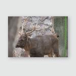 Isolated Formosan Sambar Deer Closeup Poster, Pillow Case, Tumbler, Sticker, Ornament