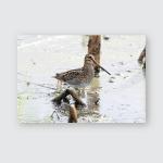 Wilsons Snipe Wisconsin Cattail Marsh Poster, Pillow Case, Tumbler, Sticker, Ornament