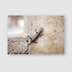 Small Reptile Hard See Poster, Pillow Case, Tumbler, Sticker, Ornament