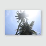 Palm Trees View Train Sri Lanka Poster, Pillow Case, Tumbler, Sticker, Ornament
