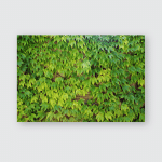 Ivy Climbing Ever Green Plants Prague Poster, Pillow Case, Tumbler, Sticker, Ornament