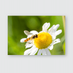 Small Wasp Just Landed On White Poster, Pillow Case, Tumbler, Sticker, Ornament