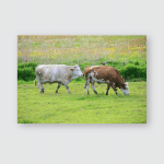 Eating Grazing Cows Calves On Meadow Poster, Pillow Case, Tumbler, Sticker, Ornament