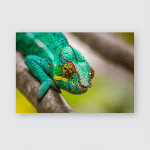 Panther Chameleon Endemic Reptile Reunion Mauritius Poster, Pillow Case, Tumbler, Sticker, Ornament