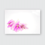 Paper Flowers Bougainvillea Pink On White Poster, Pillow Case, Tumbler, Sticker, Ornament