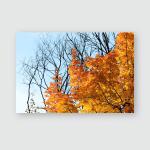 Bright Foliage Maple Tree On Sunny Poster, Pillow Case, Tumbler, Sticker, Ornament
