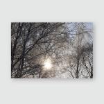 Bright Frost Rays Sun Branches Birch Poster, Pillow Case, Tumbler, Sticker, Ornament