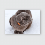 British Lopeared Gray Cat On Snow Poster, Pillow Case, Tumbler, Sticker, Ornament