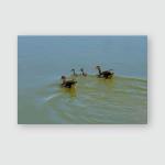 Egyptian Goose Family Swimming On Lake Poster, Pillow Case, Tumbler, Sticker, Ornament