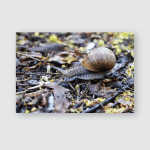 Snail Crawling On Autumn Leaves Close Poster, Pillow Case, Tumbler, Sticker, Ornament