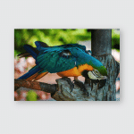 Parrot Blue Yellow Nad Green Sitting Poster, Pillow Case, Tumbler, Sticker, Ornament