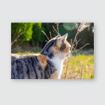Partial Side View Sunlit Cat Staring Poster, Pillow Case, Tumbler, Sticker, Ornament